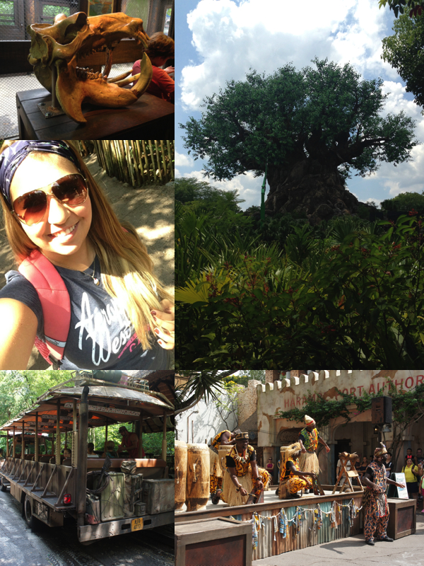 animal kingdom1